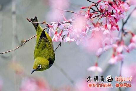 鸟语花香的女宝宝起名取名