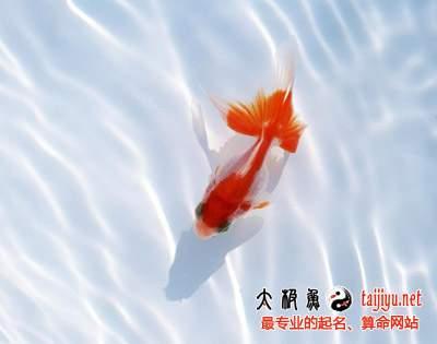 孕妇梦见鱼周公解梦