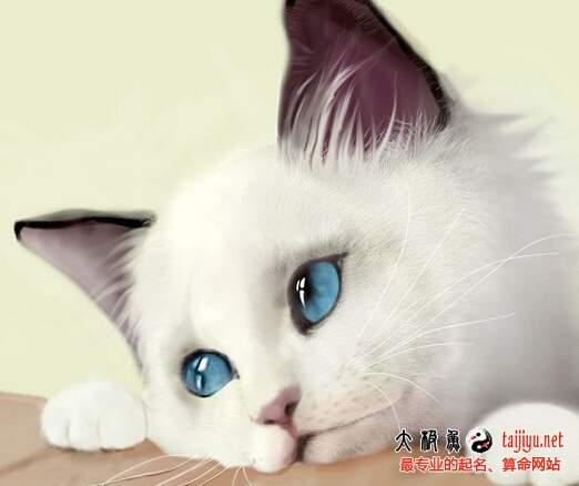 梦见猫是什么意思 梦见猫叫
