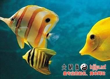 梦见鱼是什么意思 孕妇梦见鱼