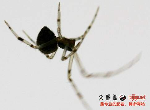 梦见蜘蛛是什么意思