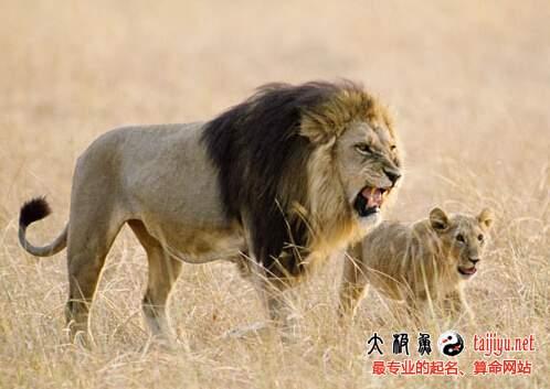 梦见狮子的解释