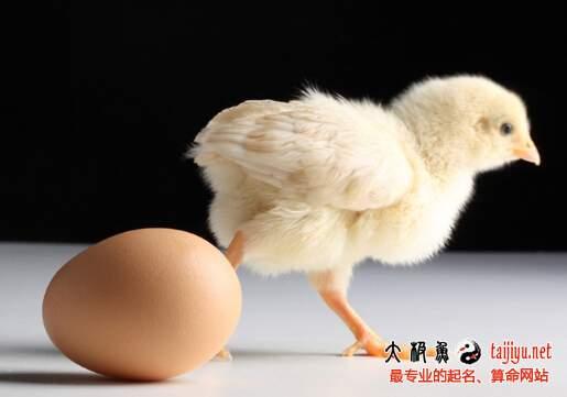 鸡宝宝起名讲究