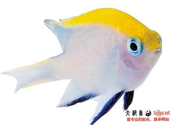 梦见鱼的含义