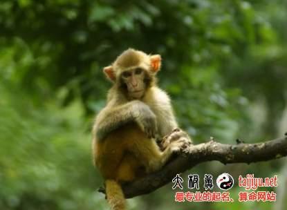 属猴人一生的命运和婚姻