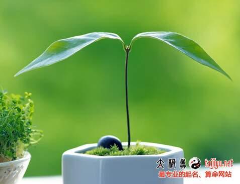 梦见绿色植物的解释