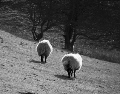 羊宝宝与家人生肖的关系和流年运势