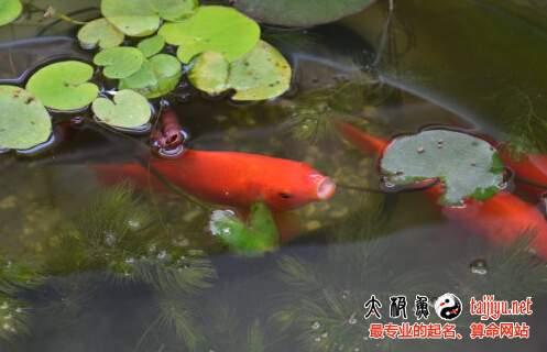 养鱼催财风水原则