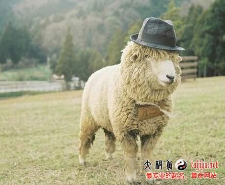 2015年生羊宝宝好不好?