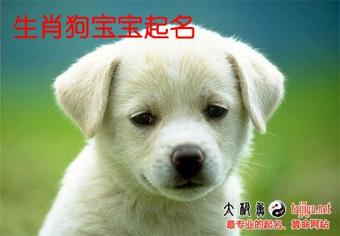 狗宝宝起名大全